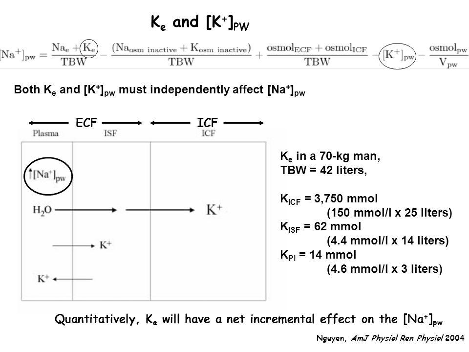 Ke and [K+]PW Both Ke and [K+]pw must independently affect [Na+]pw ECF